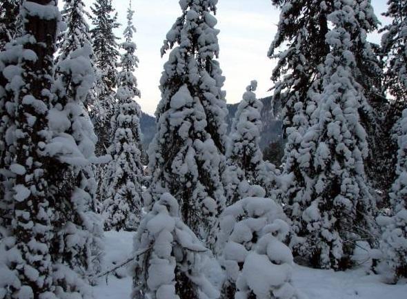 Открытие горнолыжного комплекса «Артыбаш» состоится 28 ноября